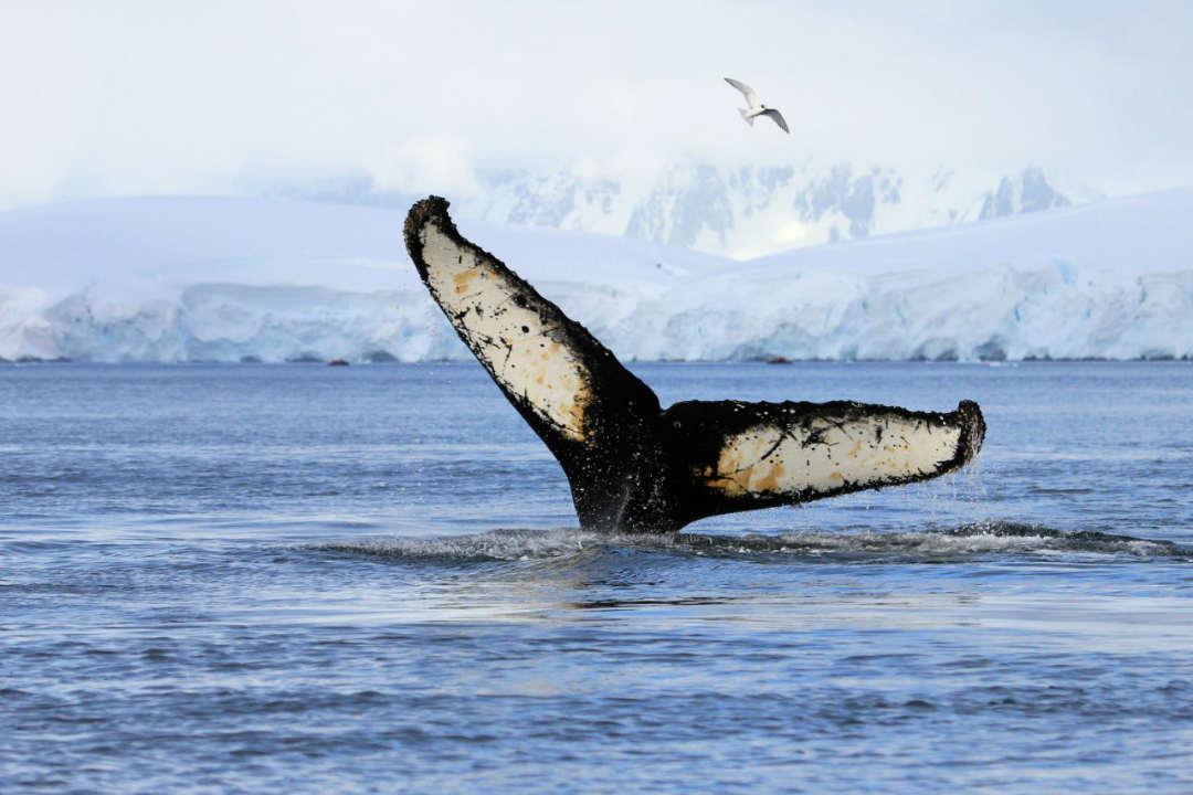 Tokyo Whale