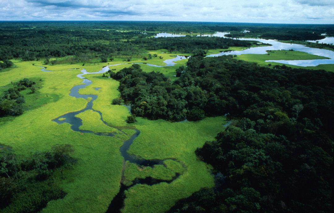 The Komodo blockchain to save the jungle in Peru