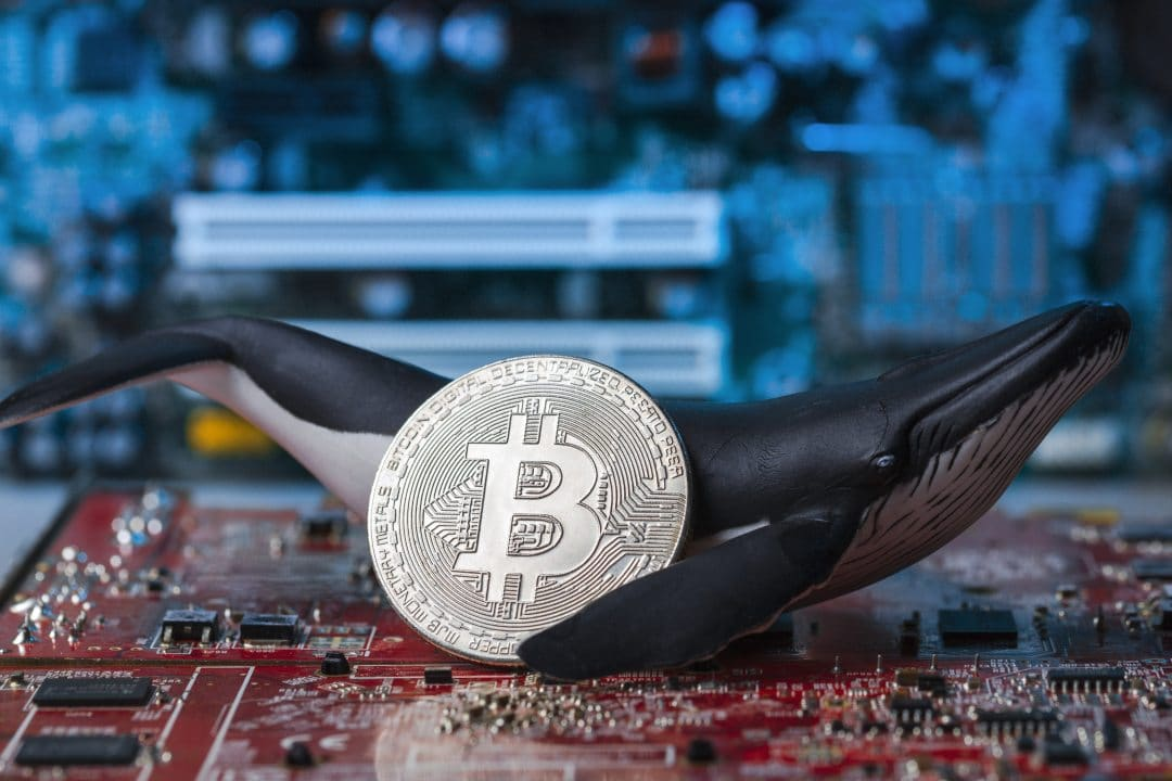 """Nicholas Merten: """"the price of bitcoin is too influenced by whales"""""""