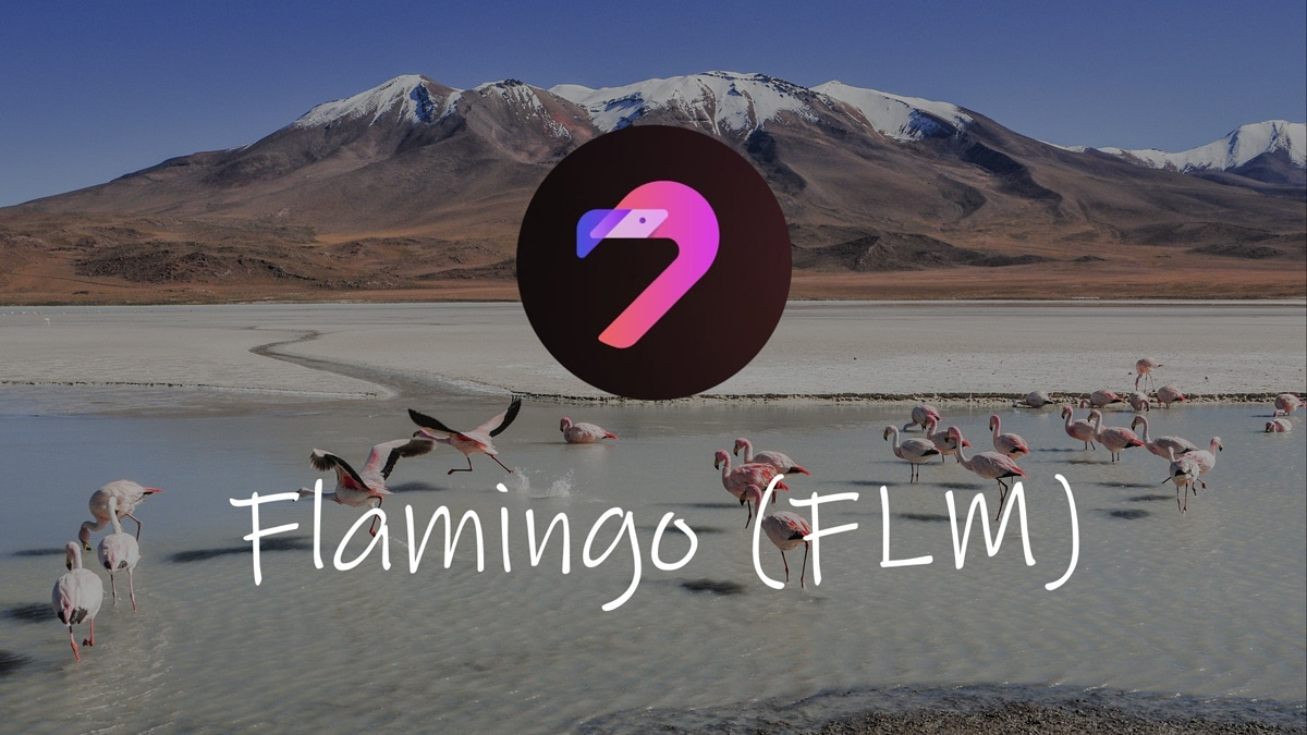 flamingo finance
