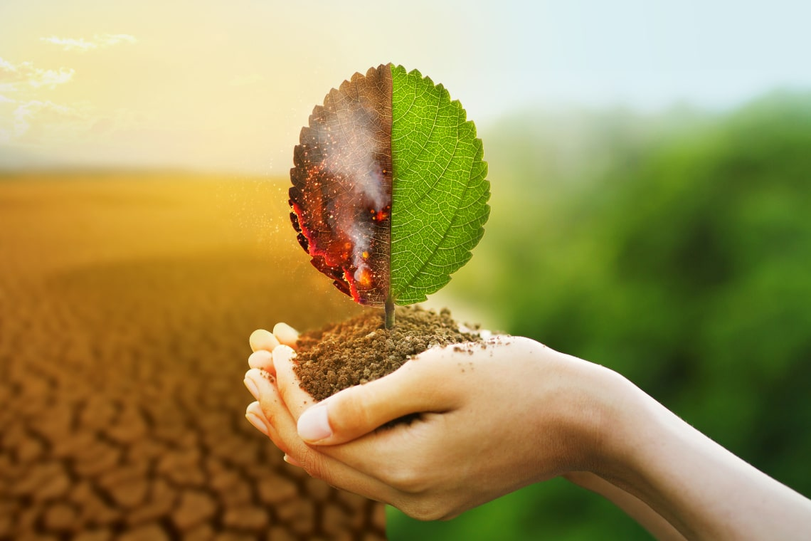 UN: NFTs will now fight climate change