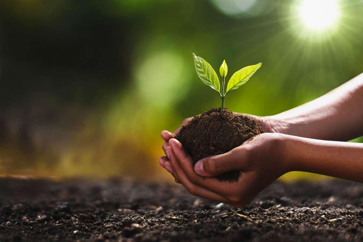 New Bitcoin ETF plants trees to offset mining impact